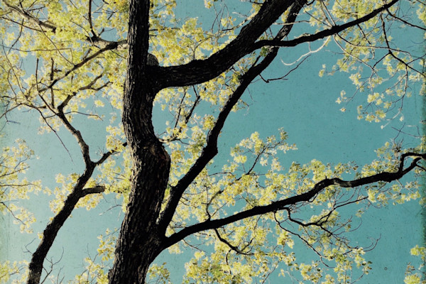 40 x 60 ORL-5867-6 Spring Tree II