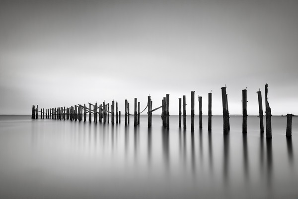 """Still"" Fine art, black and white seascape pier pilings photograph"