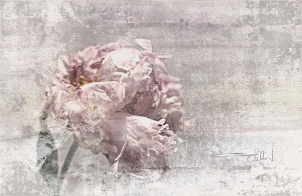 Shabby chic art and paintings for sale by Irena Orlov.  Beautiful shabby chic floral art, shabby chic flowers, all that can be purchased as original paintings, or as fine art prints on canvas, paper, or metal.