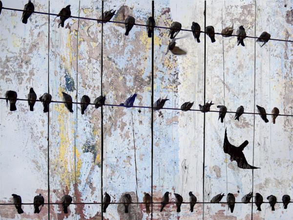 ORL-1123 SPRING BIRDS II