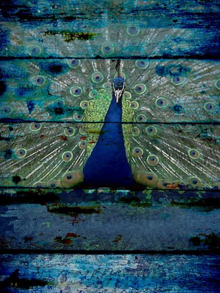 ORL-1098 Peacock III
