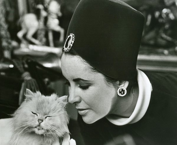 Original Vintage Press Print Elizabeth Taylor with a Kitten
