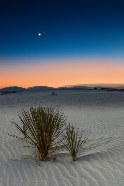 Jupiter Venus Converge Over White Sands Yucca photograph for sale as art.