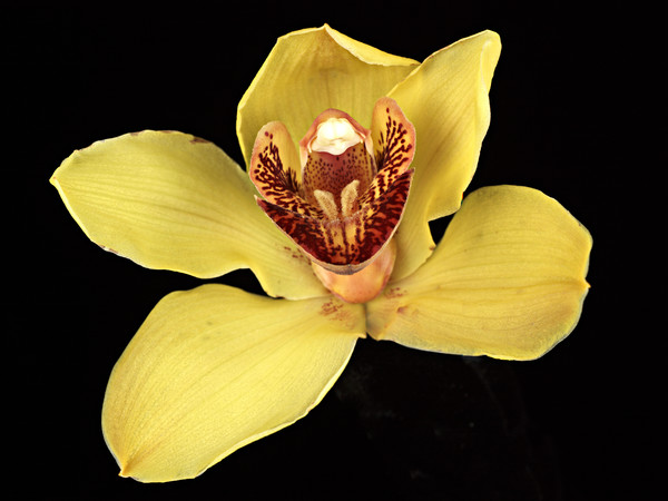 Orchid Yellow F-Edit-2