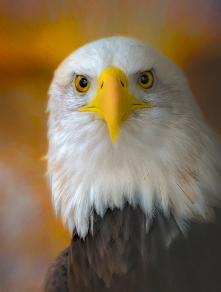 Eagle wildlife american symbol predator Wall Decor fleblanc