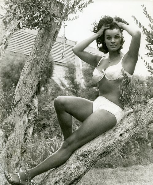 Original Vintage Press Print Actress Sentra Berger posing in a tree