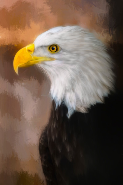 Bald Eagle Predatory Liberty Raptor Wall Decor fleblanc