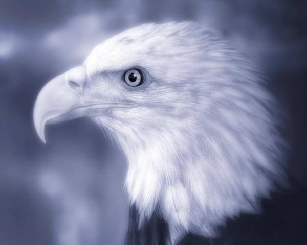 Bald Eagle Predatory Majestic Bird Decor|Wall Decor fleblanc
