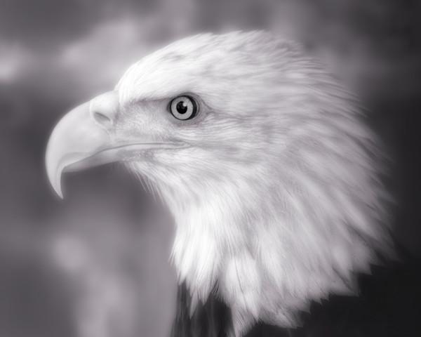 Bald Eagle Predatory Majestic Patriot|Wall Decor fleblanc