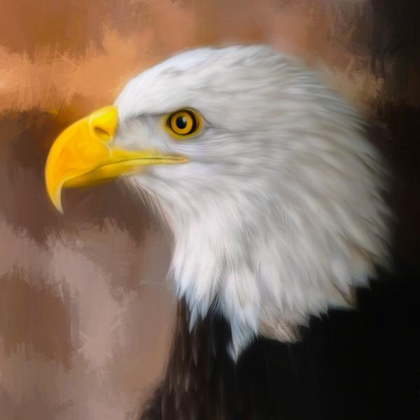 Bald Eagle Predatory Liberty Bird-of-prey Wall Decor fleblanc