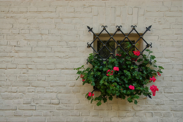 Photograph of a Swiss Window Garden with Geraniums for sale as fine art.