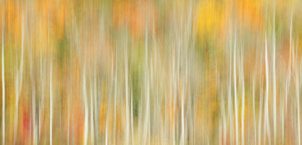 Autumn Tapestry for sale as fine art photograph.