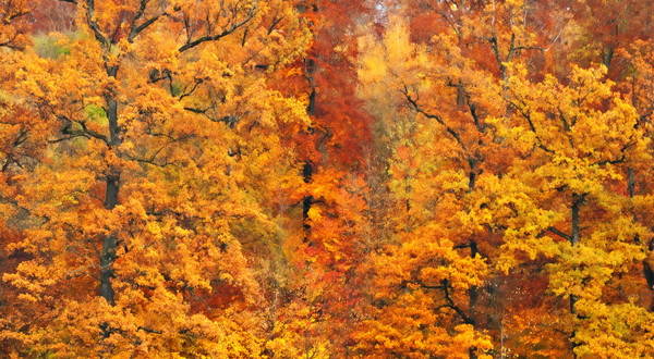 Photograph of Fall foliage for sale as fine art.