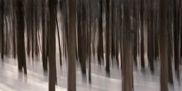 Photograph of winter forest for sale as fine art.