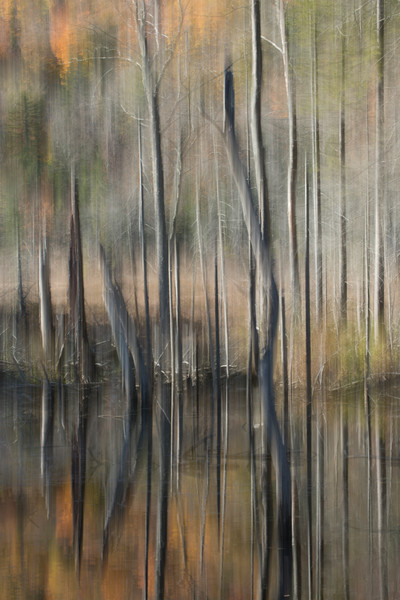 Photograph of burned trees in an fall forest for sale as fine art.