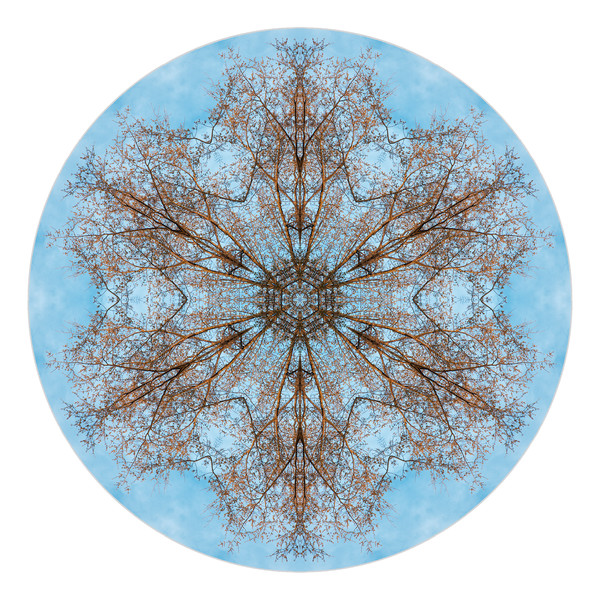 Delicate Oak for sale as fine art photographic mandala.