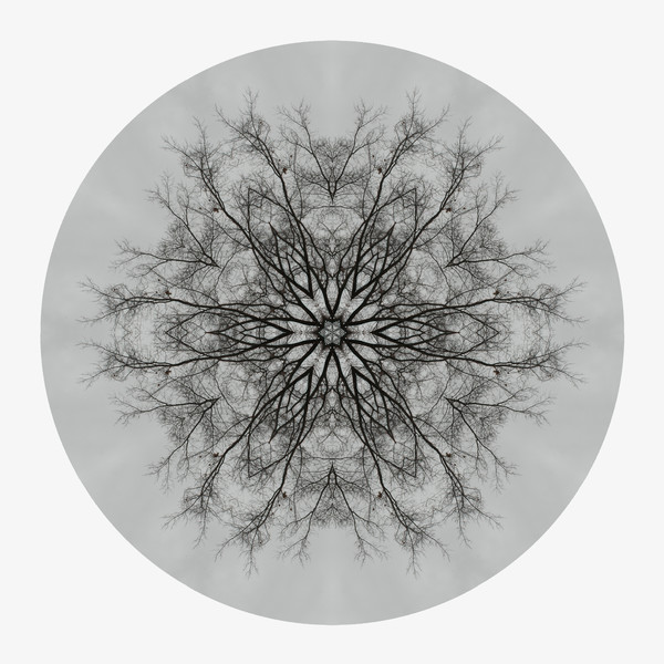 Winter Oak for sale as fine art photographic mandala.