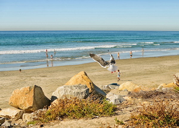 Seagull at Torey Pines | Fine Art Travel Photographs