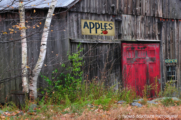 Vintage New Hampshire countryside barn wall decor prints/Autumn apple barn in New England/art prints for home or office