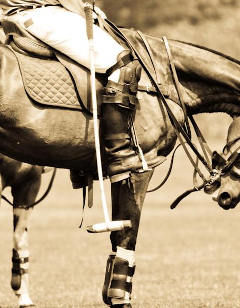 sport horse art and photographs