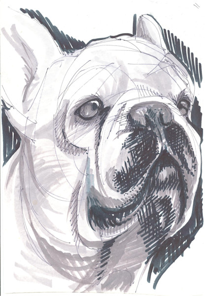 pet drawing, bulldog art
