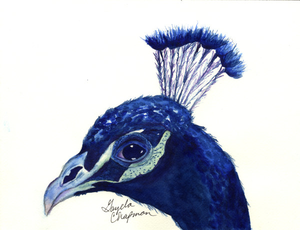 Peacock art by Gayela's Premiere Watercolor|Main Store
