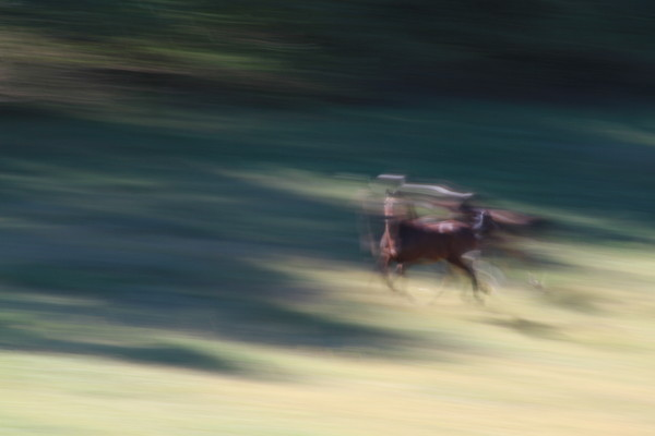 Beautiful equine art and photographs