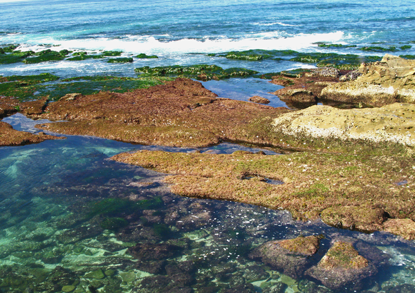 tide pools in la jolla