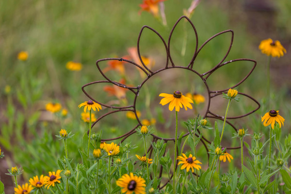 Black Eyed Susan With Yard Art photograph for sale as art by Mike Jensen