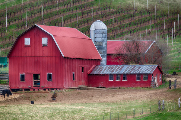 Red Barn In The Vinard photograph for sale as art by Mike Jensen