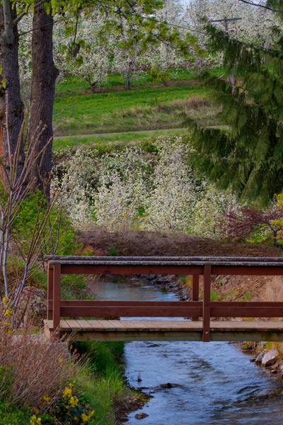Footbridge Over A Creek photograph for sale as art by Mike Jensen