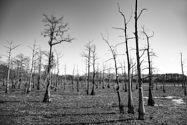 trees, winter, black, white, photo