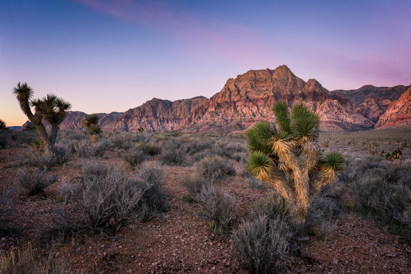 Pink Sky over Red Rock Canyon