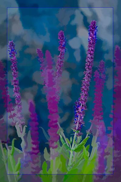 Purple Colorado Wildflowers