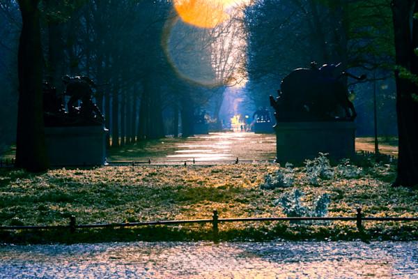 tiergarten, silhouette, flares
