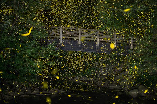 Fireflies of Bennett Park