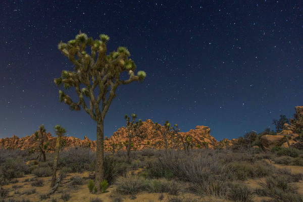 Stars Over Joshua Tree photograph for sale as art by Mike Jensen
