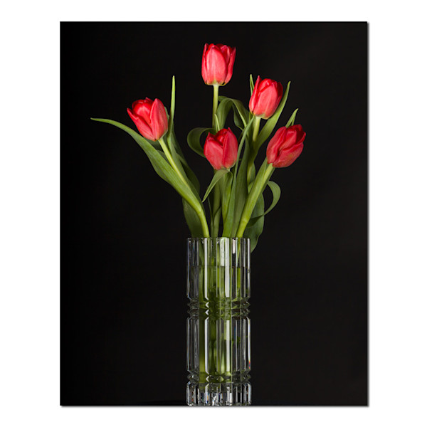 Five Red Tulips, photographs