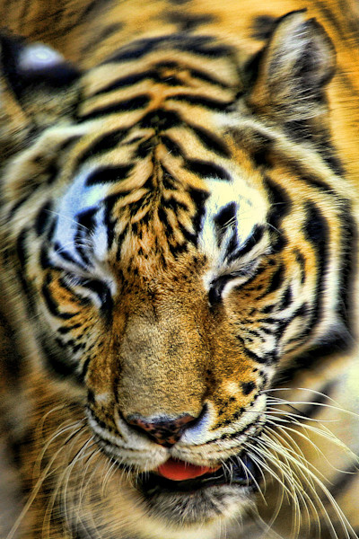 Wildlife Photographs - Fine Art Prints on Canvas, Paper, Metal & more by William Drew Photography