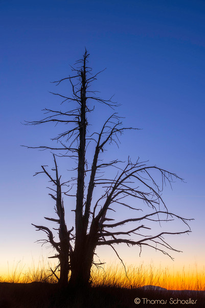 Juniper silhouette and Bryce Canyon Sunrise/Thomas Schoeller Fine art photography
