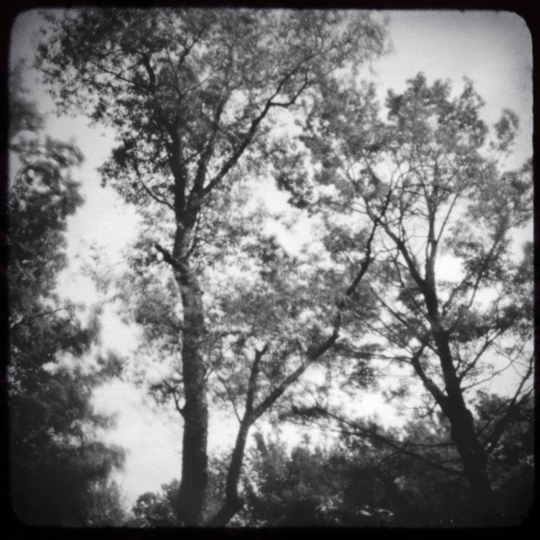 Tree Tops Pinhole Photograph - for sale as black and white fine art prints