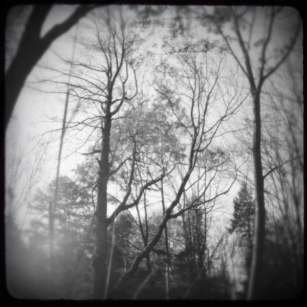 Bare Tree Tops Pinhole Photograph - for sale as fine art prints