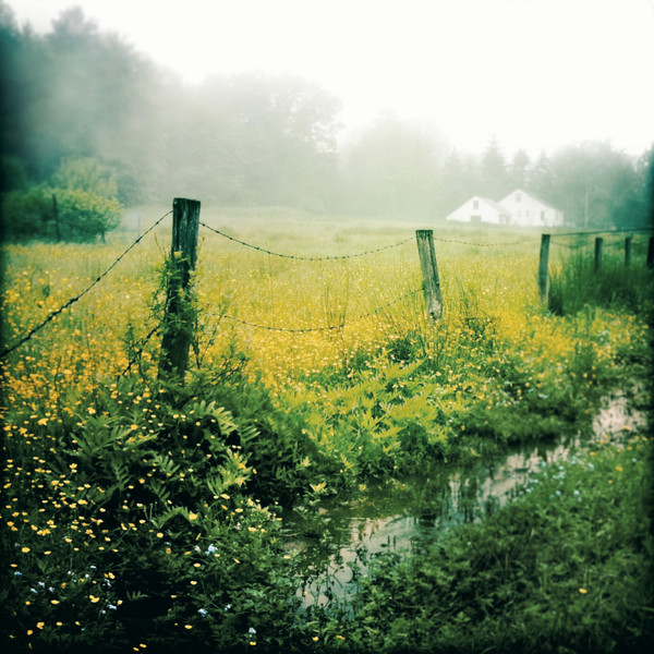 Misty Field of Buttercups photograph - for sale as fine art prints