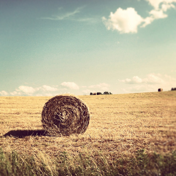 Round Hay Bale photograph - for sale as fine art prints