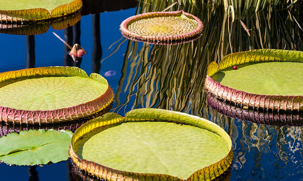images of plants and flowers as art