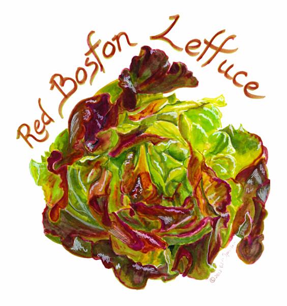 Red Boston Lettuce