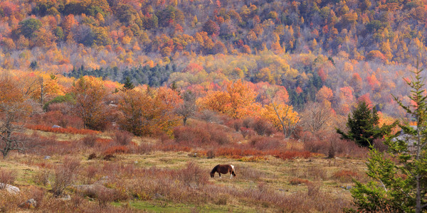 Mountain Wall Art: Grazing on a Colorful Mountain
