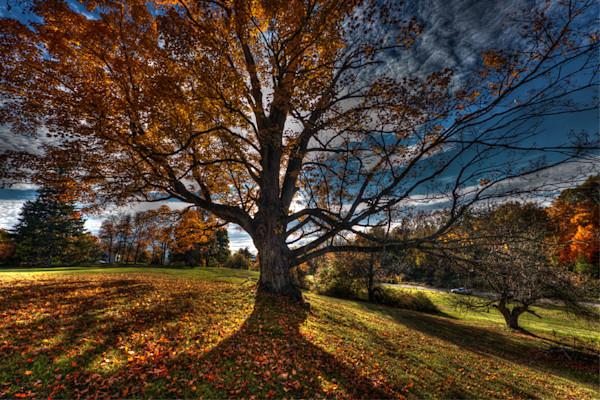 Autumn Tree 2