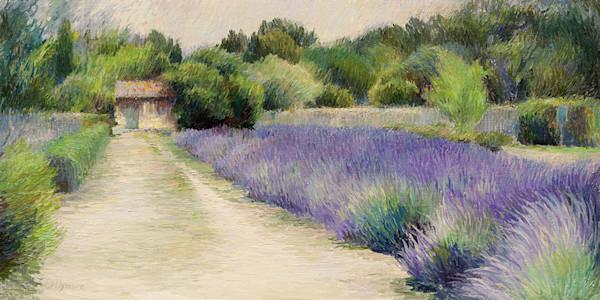 Lavender in Van Gogh's Garden -St Remy