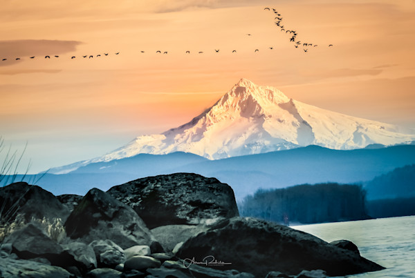 Mt Hood Sunset with flock